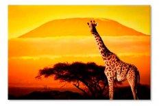 Africa girafa 5421