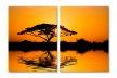 Africa peisaj copac 1702