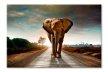 Elefant in Africa 6542