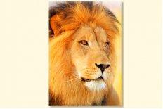 Lion 7712