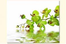 Tablouri Orhidee 22642