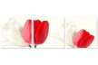 Lalele albe si rosii 2207