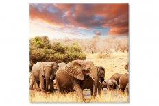 Africa elefanti 3738